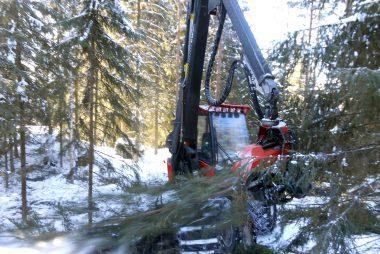 Metsät ja polttopuut